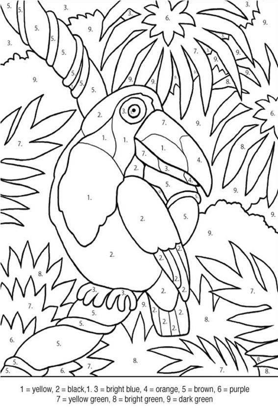 Tropical Rainforest Bird Coloring